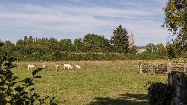 22 août 2015 : Paysage champêtre près d'où on voit la Cath. Notre-Dame de Sées, Orne (61), France  August 22 th, 2015 : Cath. Notre-Dame, Sées, France