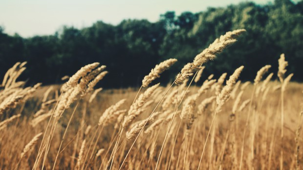 nature-field-summer-agriculture