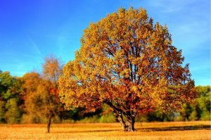 tree-99852_640 giani pralea-pixabay