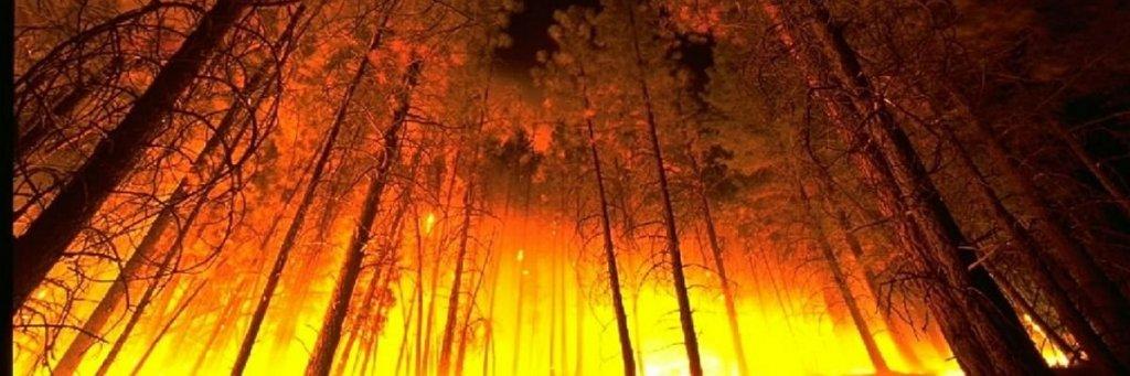 feu incendie