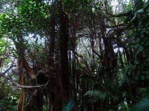 jungle-406783_1920