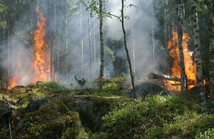 forest-fire-432870_1920