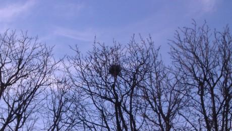 arbres_nid